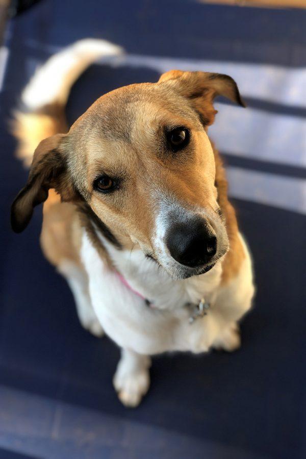 Pet adoption rises due to covid-19 pandemic