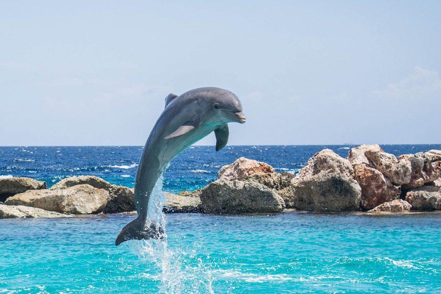 Environmental+Activist+Shines+Spotlight+on+Alternatives+to+Zoos+and+Aquariums