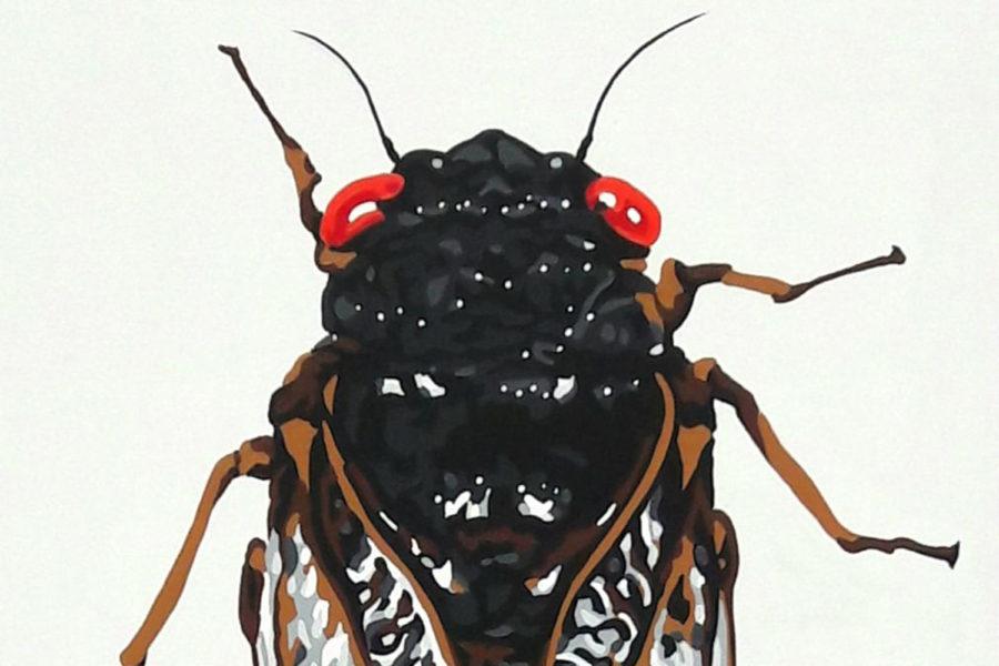 Sound the Alarm! Cicadas are Back